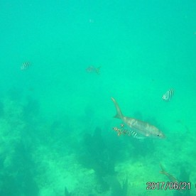 Swimming with the fishies